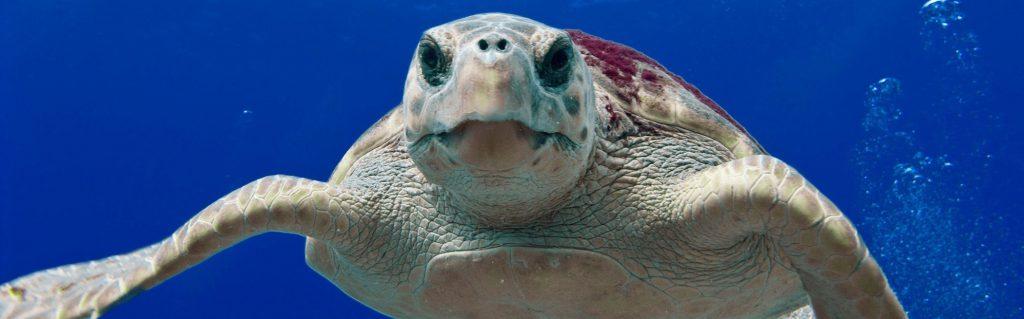 e wil leren leidinggeven onderwater en je wil je verder verdiepen in de mogelijke gevaren onderwater