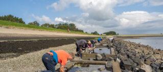 Over gestippelde dieseltreinwormen en langlob-ribkwallen… – Specialty Onderwaterbiologie